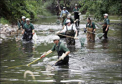 Maintaining an outstanding urban fishery in Auburn Hills takes dedicated volunteers