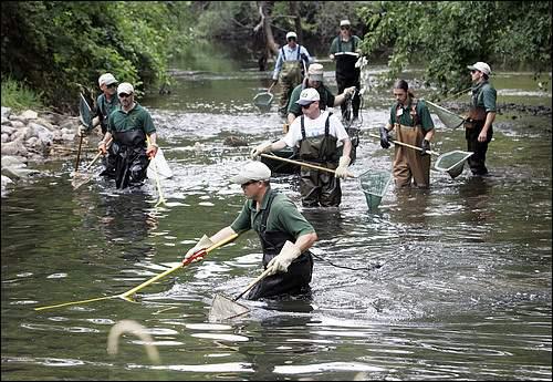 Maintaining an outstanding urban fishery in Auburn Hills takes dedicated volunteers