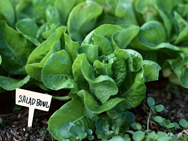 _garden-compost