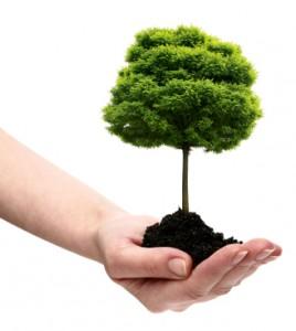 PlantingTree_v2-268x300
