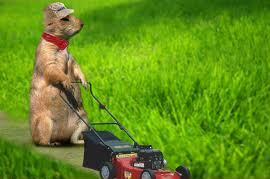Almost time to cut the grass!