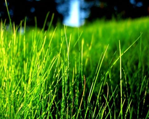 Grass_The-grass-30825840-1280-1024