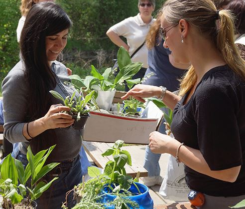 Trading Plants at the Perennial Exchange