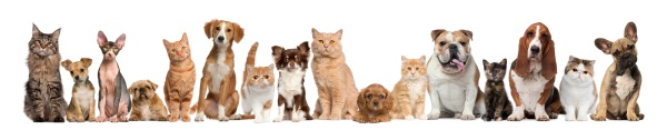 Pets are very enjoyable to many people and families.  Just make sure they are not a nuisance to your neighbors.